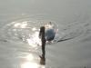 Am Tegeler See